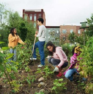 community garden new bedford guide