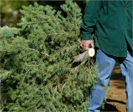 New Bedford Christmas Tree Collection Schedule – New ...