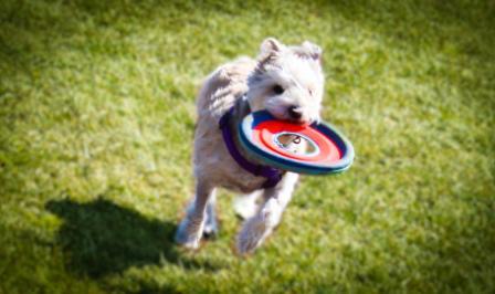 new-bedford-dog-park