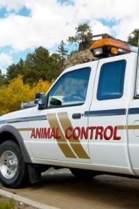 animal-control-new-bedford