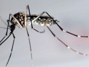 mosquito-spraying-new-bedford