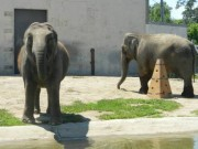 buttonwood-park-zoo-elephants