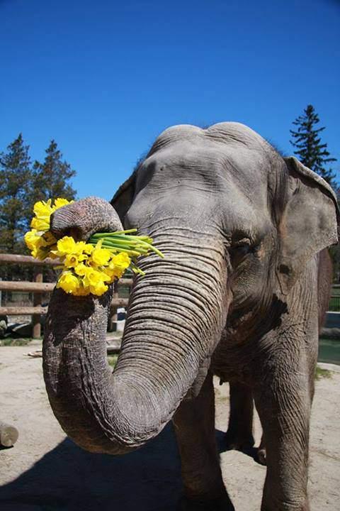 elephant plea