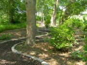 buttonwood-park-trees