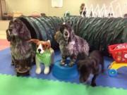 MJs Pet Training Academy7