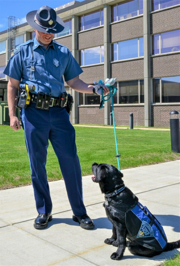 Massachusetts State Police welcome English Black Labrador