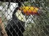 argentina-bird