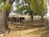 argentina-horse-farm