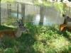 buttonwood-park-zoo-deer