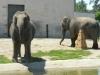 buttonwood-park-zoo-elephants