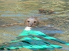 buttonwood-park-zoo-seal