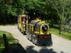 buttonwood-park-zoo-train