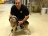 new-bedford-dog-animal-control-chance-jpg