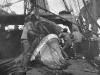 morgan-crew-at-work-whaling-museum-jpg
