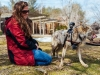 Cody-coyote-new-bedford-zoo.jpg