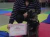 MJs Pet Training Academy10.jpg