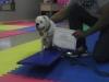 MJs Pet Training Academy14.jpg