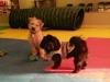 MJs Pet Training Academy15.jpg