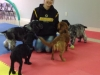 MJs Pet Training Academy4.jpg