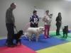 MJs Pet Training Academy5.jpg