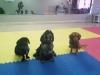 MJs Pet Training Academy6.jpg