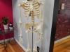 skeleton-1-jpg