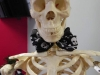 skeleton-close-up-jpg