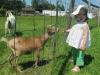 silverbrook-acushnet-farm-animals2