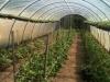 silverbrook-farm-dartmouth3