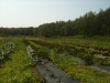 silverbrook-farm-dartmouth17