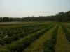 silverbrook-farm-dartmouth20