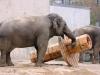 elephants-toys-buttonwood-park-zoo-new-bedford-jpg