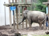 elephants-toys-buttonwood-park-zoo-new-bedford2-jpg