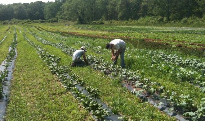 Silverbrook Farm Dartmouth CSA