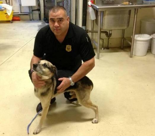 new-bedford-dog-animal-control-chance
