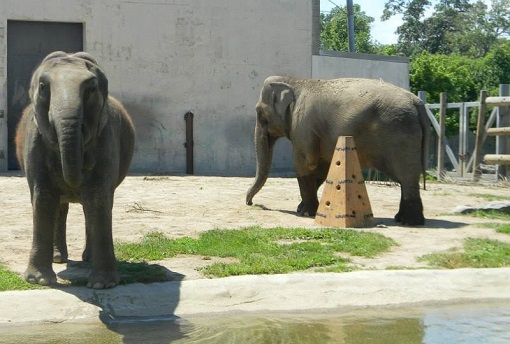 Elephants at the Buttonwood Park Zoo - photo by Michael Silvia